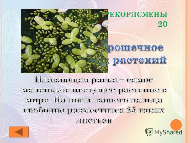 Р АСТЕНИЯ - РЕКОРДСМЕНЫ 20