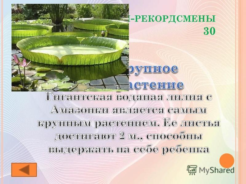 Р АСТЕНИЯ - РЕКОРДСМЕНЫ 30