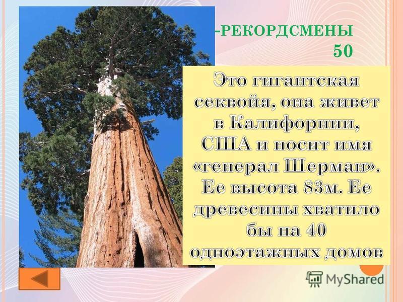 Р АСТЕНИЯ - РЕКОРДСМЕНЫ 50