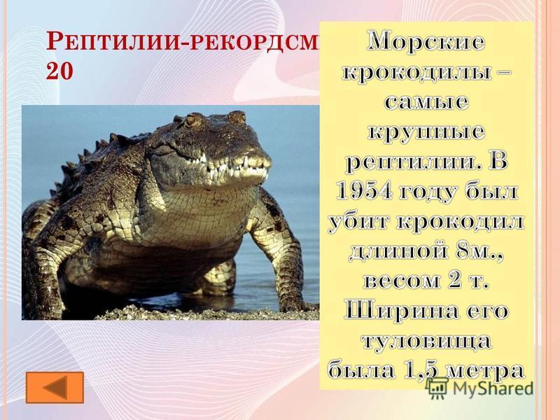 Р ЕПТИЛИИ - РЕКОРДСМЕНЫ 20