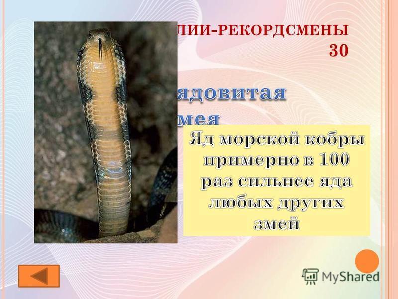 Р ЕПТИЛИИ - РЕКОРДСМЕНЫ 30