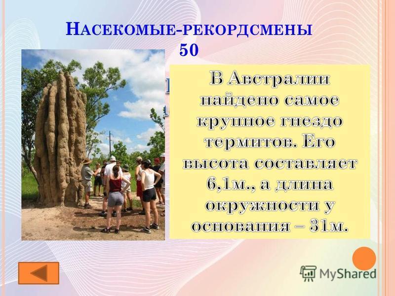 Н АСЕКОМЫЕ - РЕКОРДСМЕНЫ 50