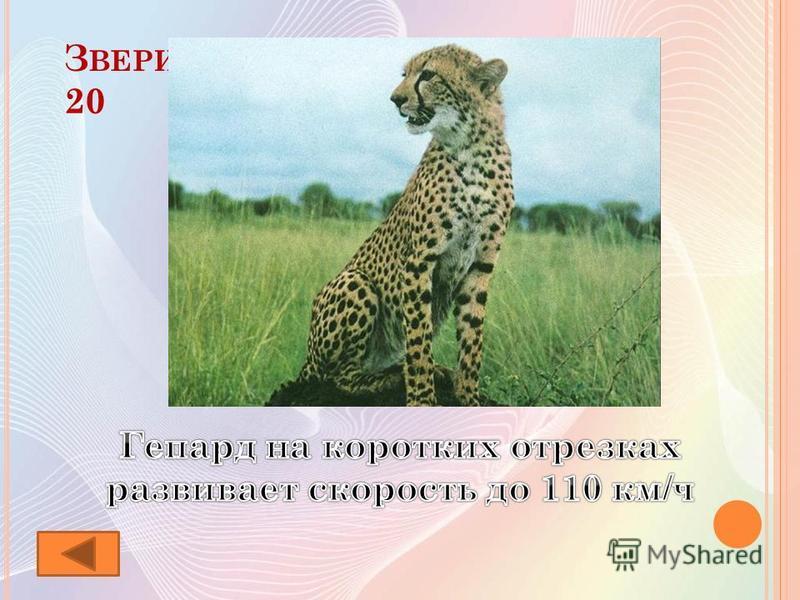 З ВЕРИ - РЕКОРДСМЕНЫ 20