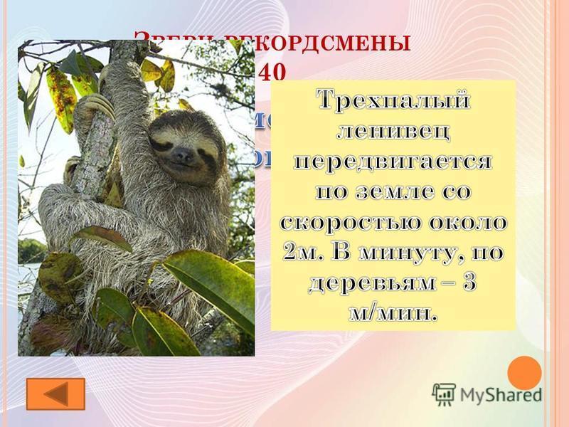 З ВЕРИ - РЕКОРДСМЕНЫ 40
