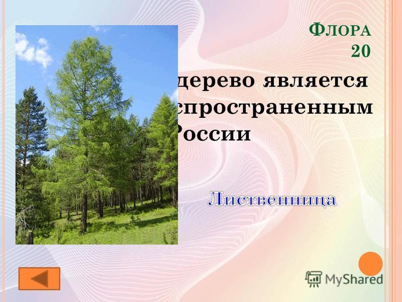Ф ЛОРА 20