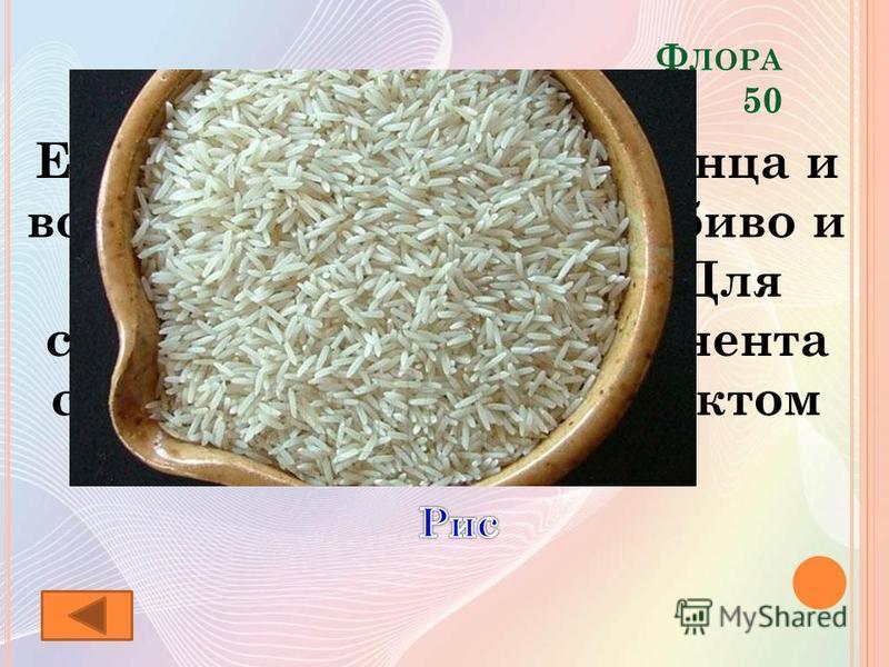 Ф ЛОРА 50 Его называют сыном солнца и воды. Растение теплолюбиво и требует обилия влаги. Для стран Азиатского континента служит основным продуктом питания.