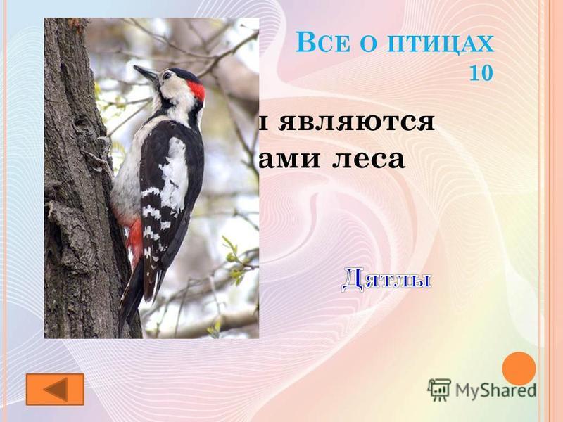 В СЕ О ПТИЦАХ 10