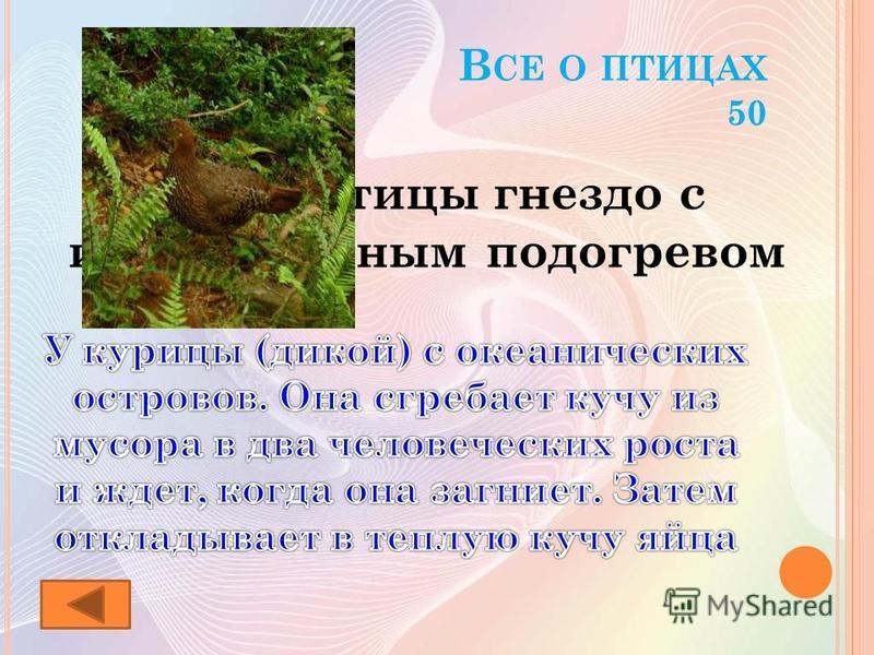 В СЕ О ПТИЦАХ 50