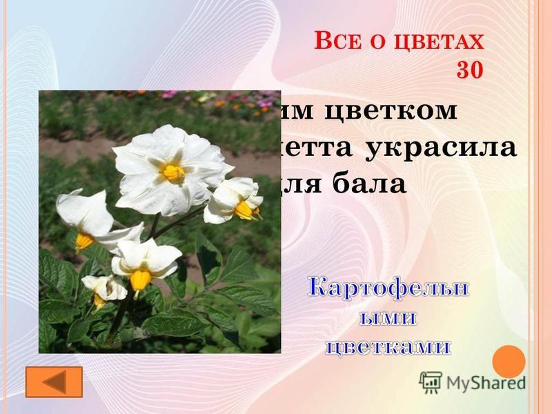 В СЕ О ЦВЕТАХ 30