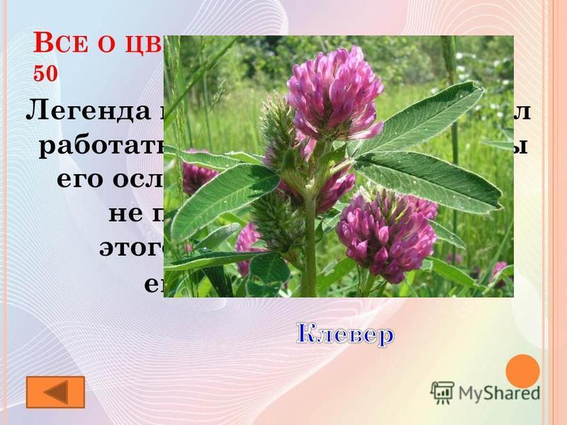 В СЕ О ЦВЕТАХ 50 Легенда гласит, что бог запретил работать в воскресенье, а пчелы его ослушались. И теперь они не питаются нектаром, этого цветка, а опыляют его только шмели.