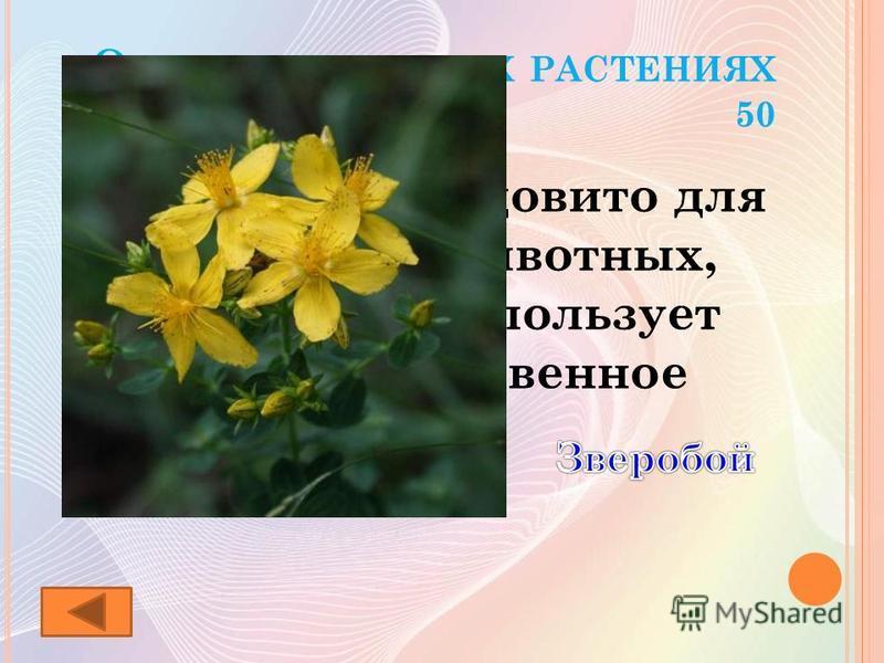 О ЛЕКАРСТВЕННЫХ РАСТЕНИЯХ 50