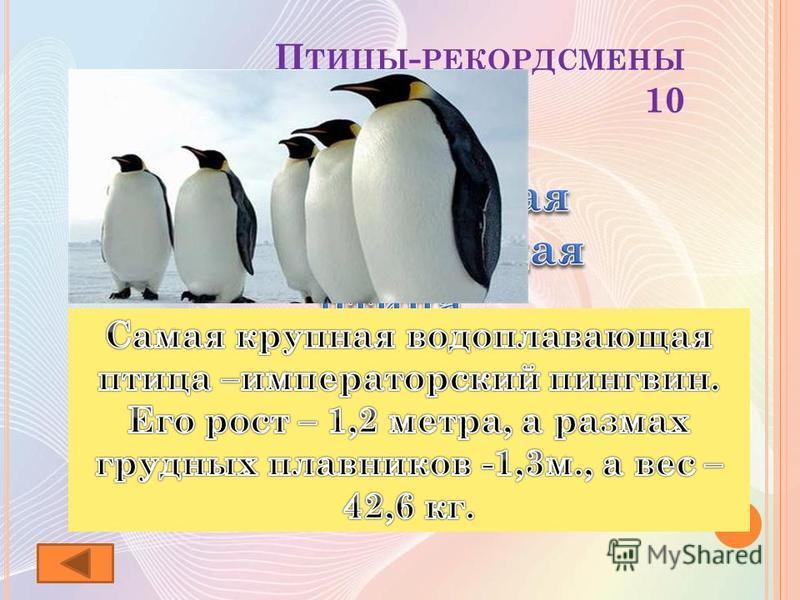 П ТИЦЫ - РЕКОРДСМЕНЫ 10