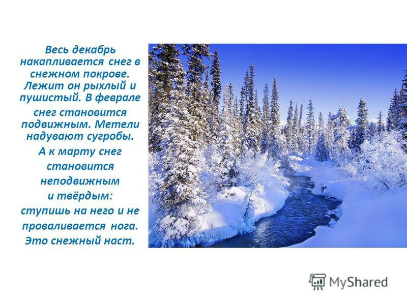 Весь декабрь накапливается снег в снежном покрове. Лежит он рыхлый и пушистый. В феврале снег становится подвижным. Метели надувают сугробы. А к марту снег становится неподвижным и твёрдым: ступишь на него и не проваливается нога. Это снежный наст.