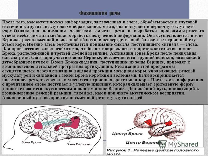 Физиология речи После того, как акустическая информация, заключенная в слове, обрабатывается в слухавой системе и в других «неслухавых» образованиях мозга, она поступает в первичную слухавую кору. Однако, для понимания человеком смысла речи и вырабо