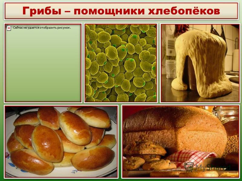 Грибы – помощники хлебопёков
