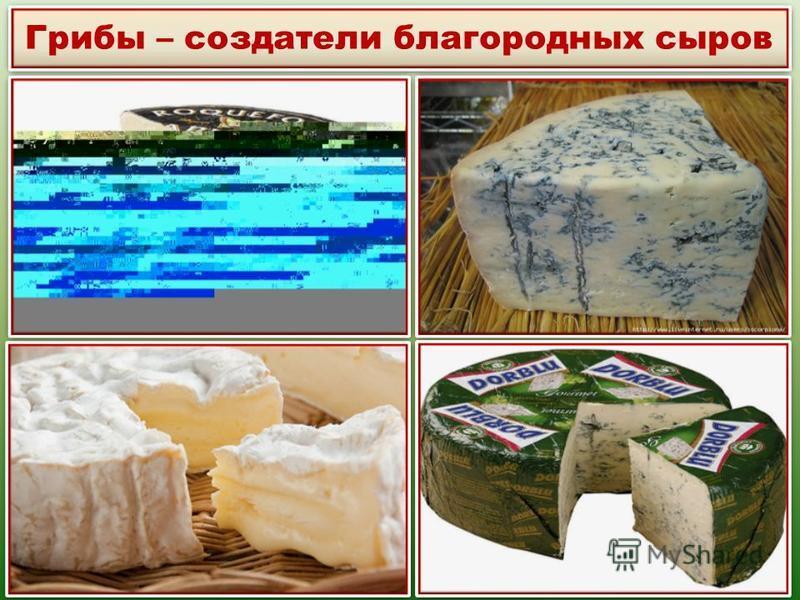 Грибы – создатели благородных сыров