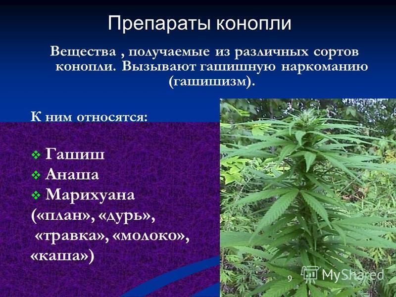 Вещества, получаемые из различных сортов конопли. Вызывают гашишную наркоманию (гашишизм). К ним относятся: Гашиш Анаша Марихуана («план», «дурь», «травка», «молоко», «каша») Препараты конопли 9