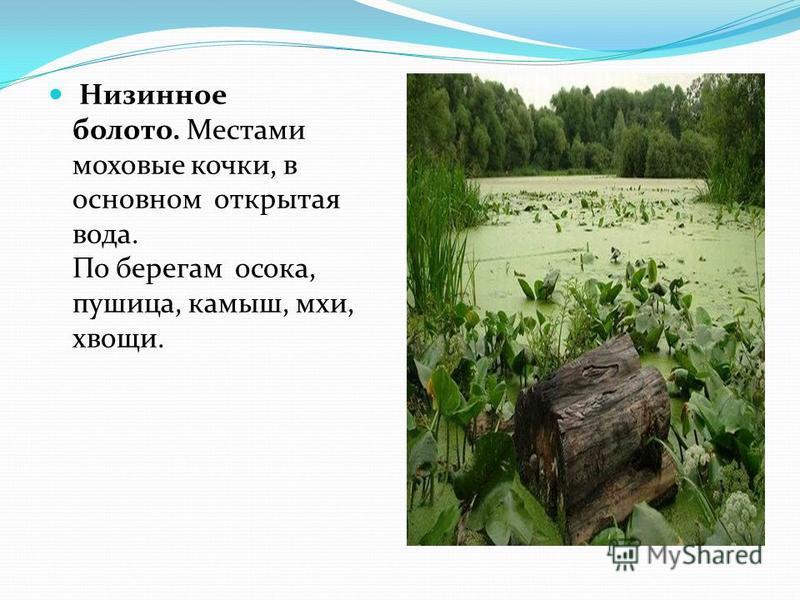 Низинное болото. Местами моховые кочки, в основном открытая вода. По берегам осока, пушица, камыш, мхи, хвощи.