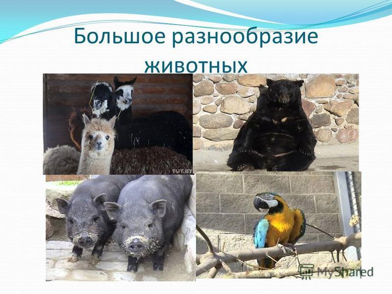 Большое разнообразие животных