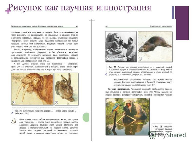 + Рисунок как научная иллюстрация