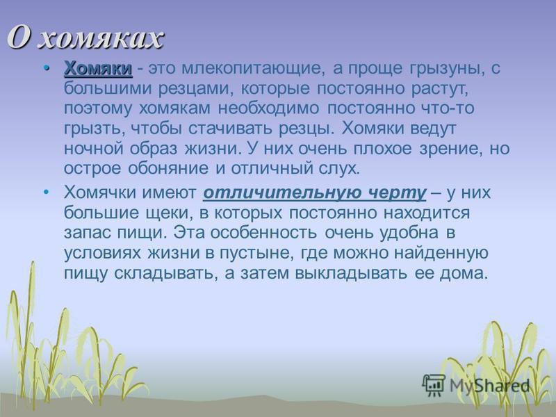 О хомяках Хомяки Хомяки - это млекопитающие, а проще грызуны, с большими резцами, которые постоянно растут, поэтому хомякам необходимо постоянно что-то грызть, чтобы стачивать резцы. Хомяки ведут ночной образ жизни. У них очень плохое зрение, но остр
