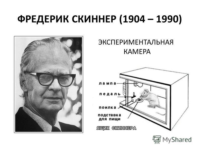 ФРЕДЕРИК СКИННЕР (1904 – 1990) ЭКСПЕРИМЕНТАЛЬНАЯ КАМЕРА