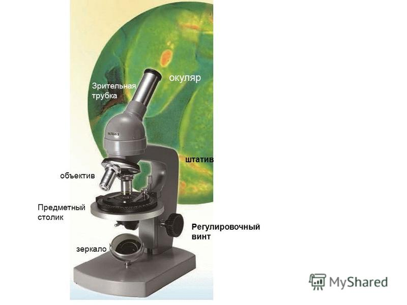 окуляр Зрительная трубка объектив Регулировочный винт Предметный столик зеркало штатив