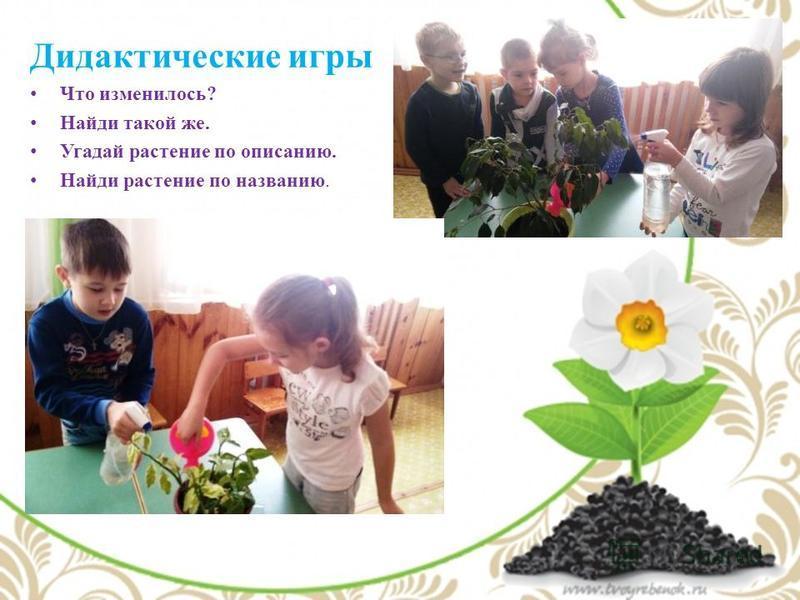 Дидактические игры Что изменилось? Найди такой же. Угадай растение по описанию. Найди растение по названию.