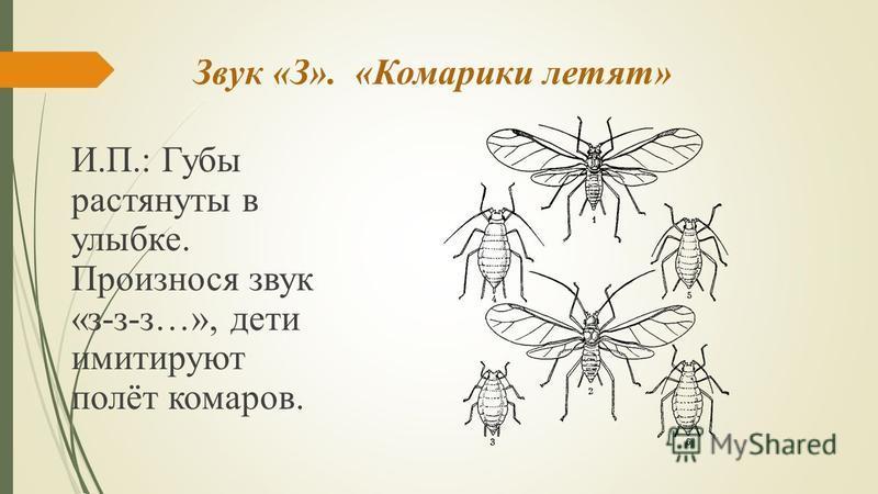 Звук «З». «Комарики летят» И.П.: Губы растянуты в улыбке. Произнося звук «з-з-з…», дети имитируют полёт комаров.