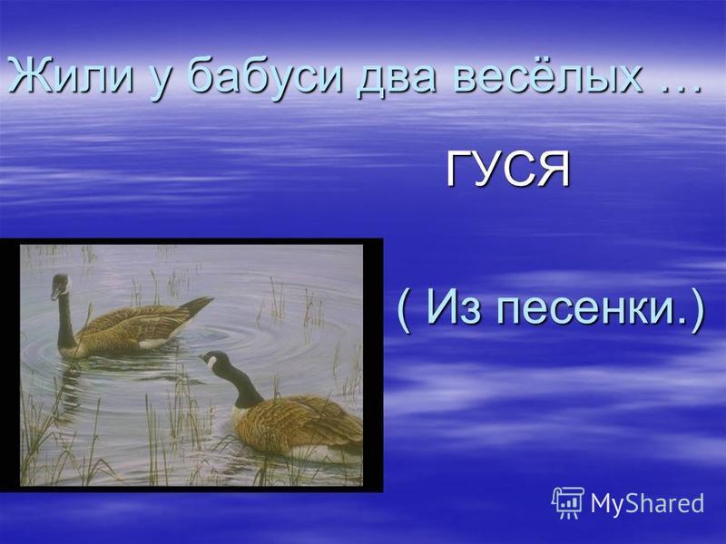 Жили у бабуси два весёлых … ( Из песенки.) ГУСЯ