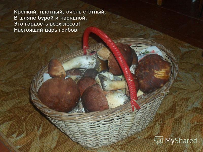 Крепкий, плотный, очень статный, В шляпе бурой и нарядной. Это гордость всех лесов! Настоящий царь грибов!