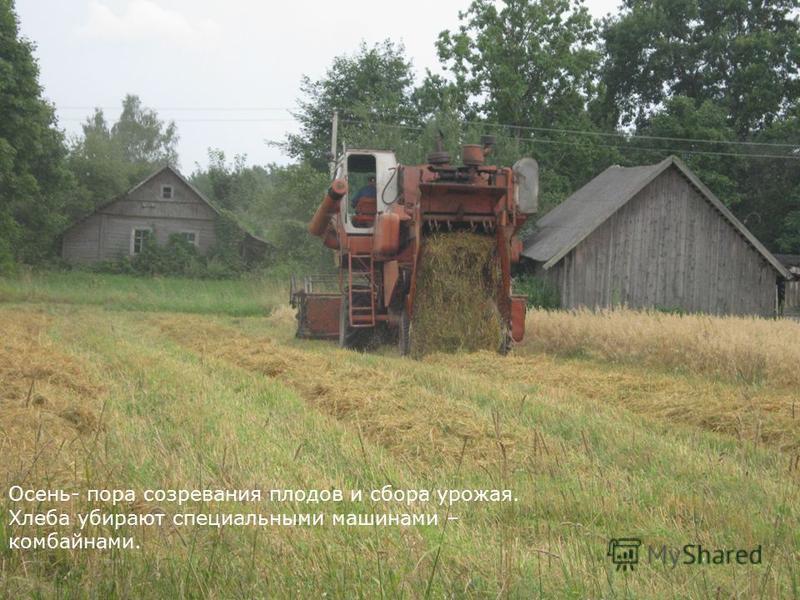 Осень- пора созревания плодов и сбора урожая. Хлеба убирают специальными машинами – комбайнами.