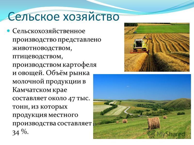 Сельское хозяйство Сельскохозяйственное производство представлено животноводством, птицеводством, производством картофеля и овощей. Объём рынка молочной продукции в Камчатском крае составляет около 47 тыс. тонн, из которых продукция местного производ
