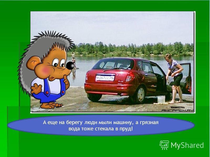 А еще на берегу люди мыли машину, а грязная вода тоже стекала в пруд!