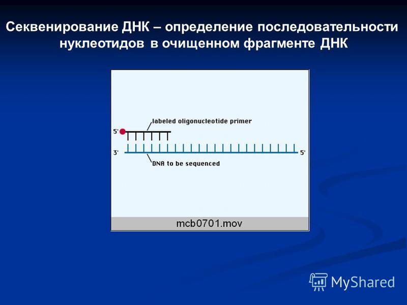 Секвенирование ДНК – определение последовательности нуклеотидов в очищенном фрагменте ДНК
