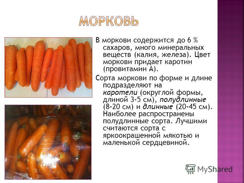 В моркови содержится до 6 % сахаров, много минеральных веществ (калия, железа). Цвет моркови придает каротин (провитамин А). Сорта моркови по форме и длине подразделяют на каротели (округлой формы, длиной 3-5 см), полудлинные (8-20 см) и длинные (20-