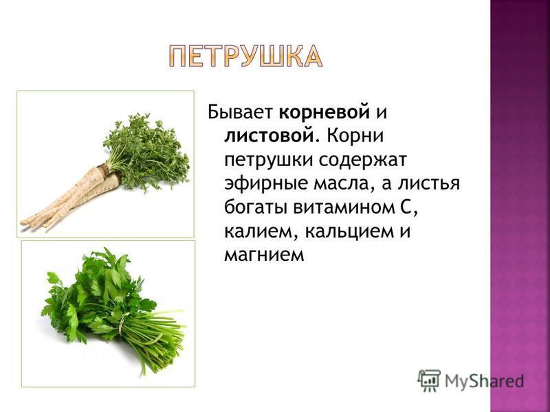 Бывает корневой и листовой. Корни петрушки содержат эфирные масла, а листья богаты витамином С, калием, кальцием и магнием