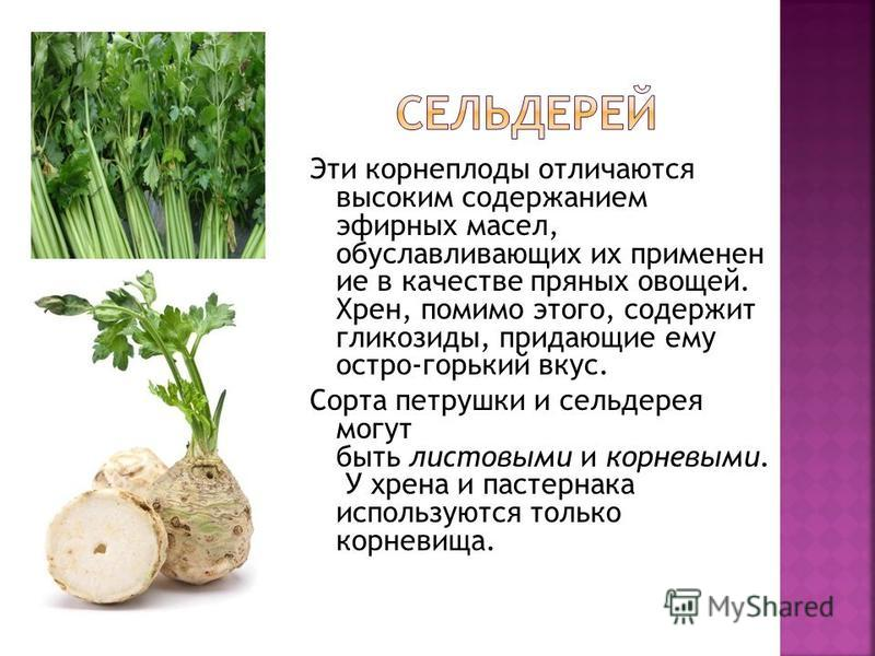 Эти корнеплоды отличаются высоким содержанием эфирных масел, обуславливающих их применен ие в качестве пряных овощей. Хрен, помимо этого, содержит гликозиды, придающие ему остро-горький вкус. Сорта петрушки и сельдерея могут быть листовыми и корневым
