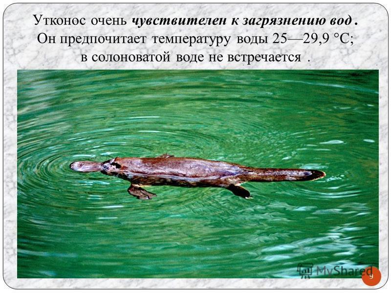 Утконос очень чувствителен к загрязнению вод. Он предпочитает температуру воды 2529,9 °C; в солоноватой воде не встречается. 9