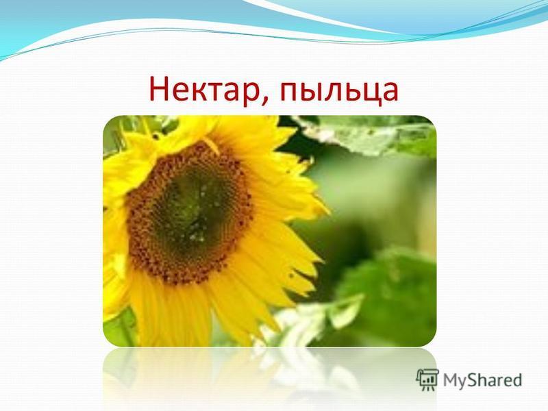 Нектар, пыльца