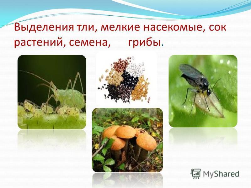 Выделения тли, мелкие насекомые, сок растений, семена, грибы.