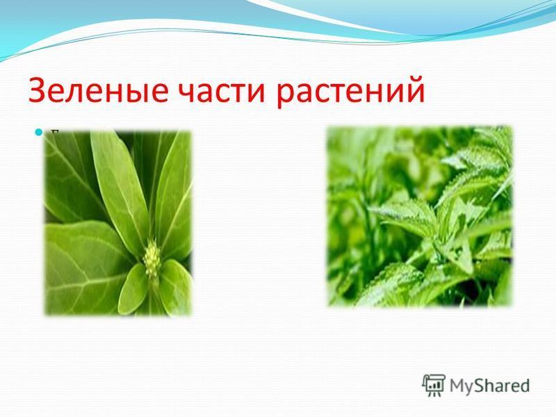 Зеленые части растений г