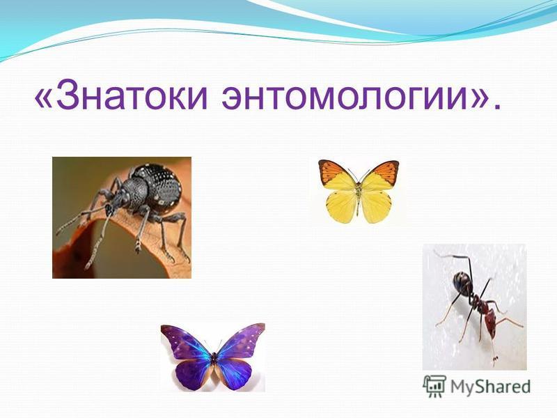 «Знатоки энтомологии».