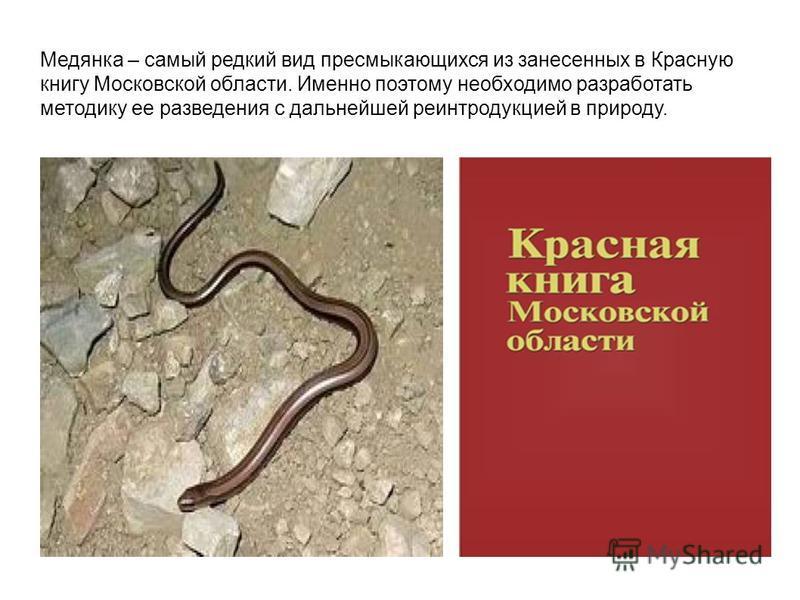 Медянка – самый редкий вид пресмыкающихся из занесенных в Красную книгу Московской области. Именно поэтому необходимо разработать методику ее разведения с дальнейшей реинтродукцией в природу.