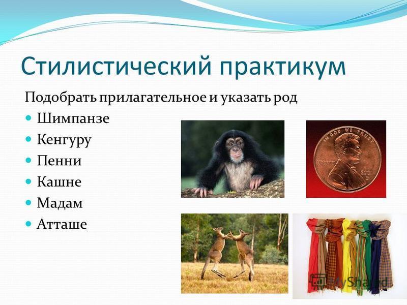 Стилистический практикум Подобрать прилагательное и указать род Шимпанзе Кенгуру Пенни Кашне Мадам Атташе