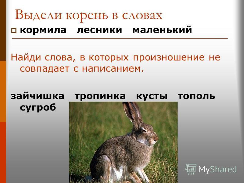 Выдели корень в словах кормила лесники маленький Найди слова, в которых произношение не совпадает с написанием. зайчишка тропинка кусты тополь сугроб