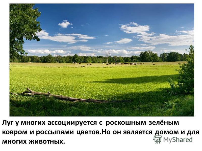 Луг у многих ассоциируется с роскошным зелёным ковром и россыпями цветов.Но он является домом и для многих животных.