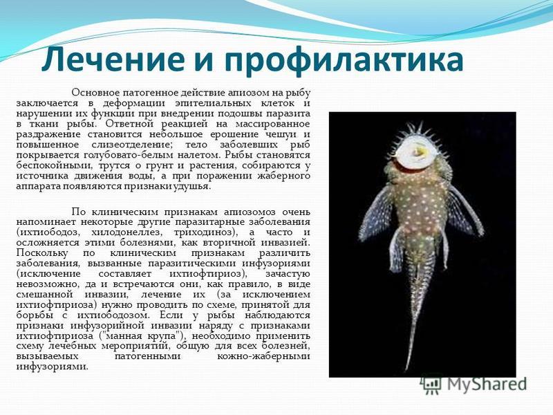 Лечение и профилактика Основное патогенное действие апиозом на рыбу заключается в деформации эпителиальных клеток и нарушении их функции при внедрении подошвы паразита в ткани рыбы. Ответной реакцией на массированное раздражение становится небольшое