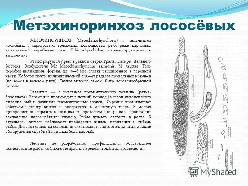 Метэхиноринхоз лососёвых МЕТЭХИНОРИНХОЗ (Metechinorhynchosis), гельминтоз лососёвых, хариусовых, тресковых, колюшковых рыб, реже карповых, вызываемый скребнями сем. Echinorhynchidae, паразитирующими в кишечнике. Регистрируется у рыб в реках и озёрах