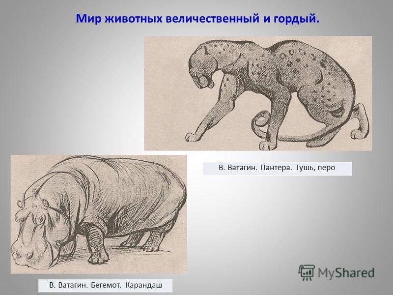 Мир животных величественный и гордый.. В. Ватагин. Бегемот. Карандаш В. Ватагин. Пантера. Тушь, перо